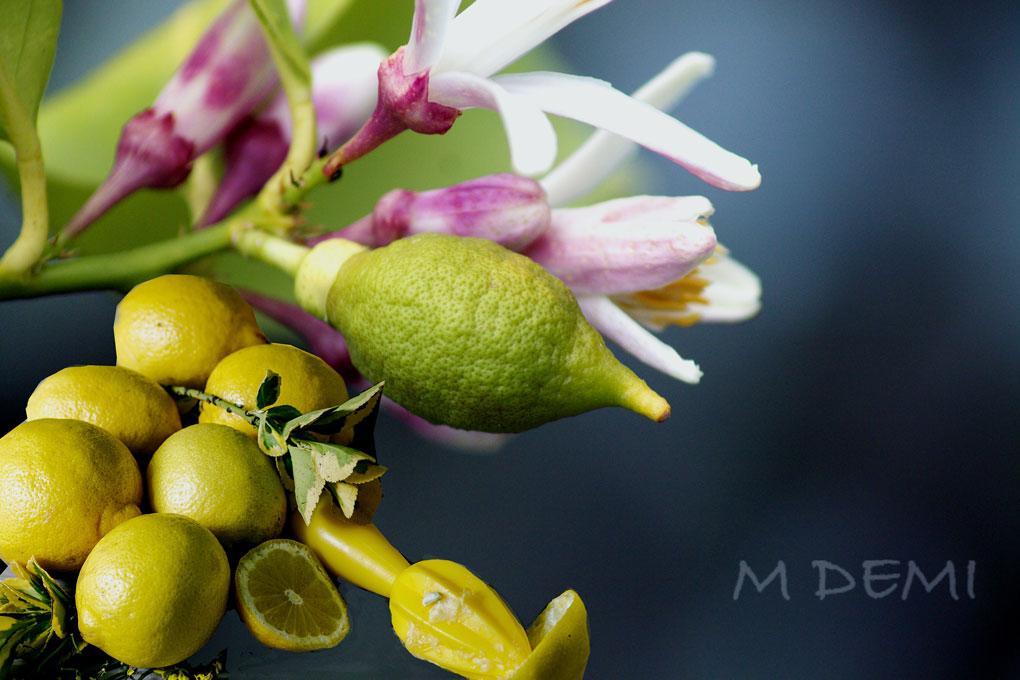 limon-y-limones